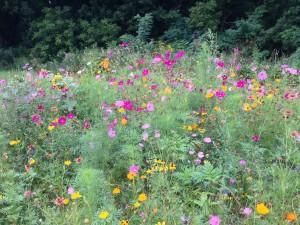 jpflowers4